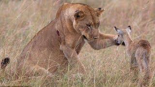 Download TOP 10 Increíbles Animales Salvando A Otros Animales || TOP 10 VÍDEOS Video
