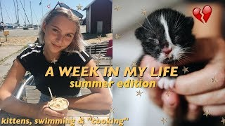 Download MY CAT HAS KITTENS!? ♡ a week in my life; summer edition. Video
