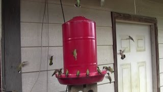 Download DIY 5 Gallon Hummingbird Feeder Video