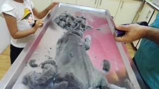 Download British Shorthair Kedi Tüy Kesimi Video