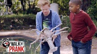 Download Pool Monster | Walk the Prank | Disney XD Video