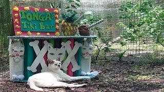 Download Life's A Beach At Big Cat Rescue Video
