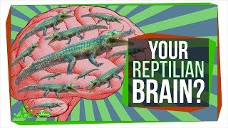 Download No, You Don't Have a ″Reptilian Brain″ Video