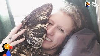Download Cuddly Tegu Lizard Is So Spoiled By His Mom | The Dodo Video