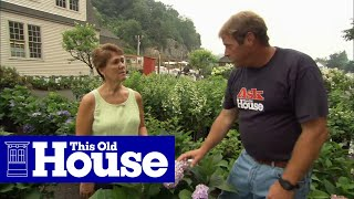 Download How to Choose and Plant Hydrangeas - This Old House Video