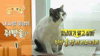 Download 고양이를 부탁해 - 내 사랑 뚱냥이 쥐방울 #001 Video