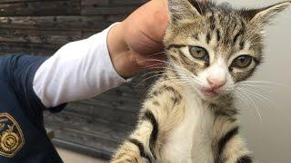 Download 仔猫ちゃん捕獲完了【亀山ダム野良猫ファミリー】Kitten capture completion Video