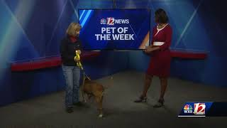 Download Noon Pet Of The Week: Mazie Video