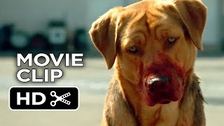 Download White God Movie CLIP - Dog Pack (2014) - Drama HD Video