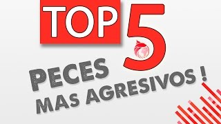 Download TOP5 Peces de acuario más agresivos || ACUARIOLAND Video