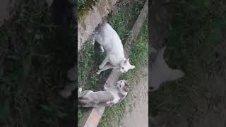 Download Real Cats fight Video