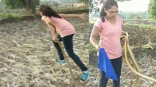Download || निडर निर्जरा, देखे कैसे पकड़े यह बड़े दो साँप || Two big ratsnakes rescue by Nirzara Chitti || Video