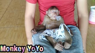 Download Dad is teaching Monkey Yoyo not to suck his fingers | Monkey Baby Yoyo | Video