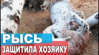 Download РЫСЬ ЗАЩИТИЛА ХОЗЯЙКУ / Зачем собакам мокрый нос? Почему у кошек морда тупая? Video
