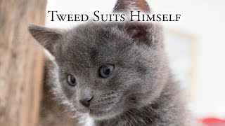 Download Tweed Suits Himself Video