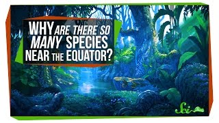 Download Why Are There So Many Species Near the Equator? Video