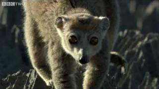Download Cute Lemurs Cross Razor-Sharp Cliffs - Madagascar, Preview - BBC Two Video