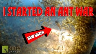 Download OH NO! I STARTED AN ANT WAR! Video