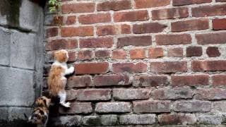 Download Stray Kittens after Rain *Read Description* Video