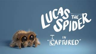 Download Lucas the Spider - Captured Video