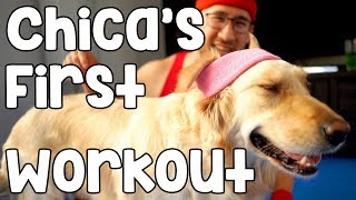 Download CHICA'S FIRST WORKOUT Video