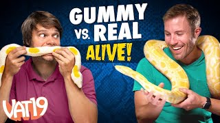 Download Gummy vs Real Challenge: LIVE ANIMAL edition! Video