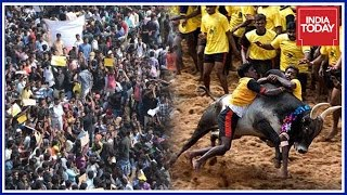 Download Madras HC Advocates Association To Boycott Work In Support Of Jallikattu Video