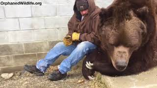 Download When your bear had a hard day and needs some extra love.... Video