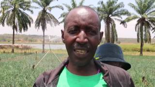 Download Small Scale Irrigation in Bugesera Video