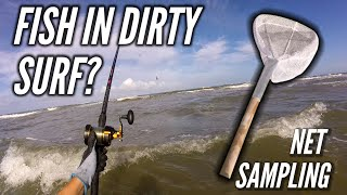 Download Can You Catch Fish in Brown Surf? - Surf Fishing Video