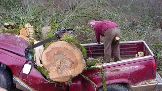 Download Tree Cutting Fails And Idiots With Chainsaws 2 Video