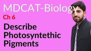 Download MDCAT Biology, Entry Test, Ch 6, Describe Photosynthetic Pigments - Chapter 6 Bioenergetics Video