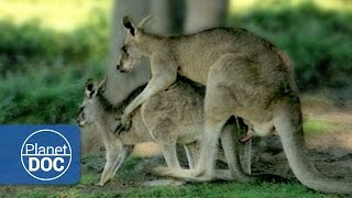 Download Relationship & Animal Mating | Sexual Conflict - Documentary Video