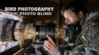 Download BIRD PHOTOGRAPHY FROM MY PHOTO BLIND - wildlife photography behind the scenes in Denmark Video
