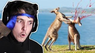 Download DEADLY AUSTRALIAN ANIMALS! Video