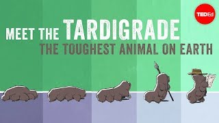 Download Meet the tardigrade, the toughest animal on Earth - Thomas Boothby Video