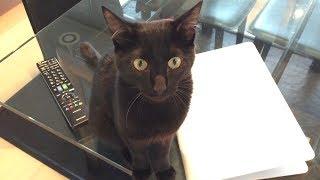Download チュパチュパしたくて我慢できない子猫。すごい要求鳴き。 Video