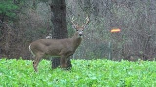 Download Big 8 Point Buck Hunt 2012 PA Archery Video