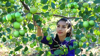 Download Cooking jujube fruit with salt in my homeland - Polin Lifestyle Video