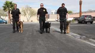 Download High Powered K9 Security Video