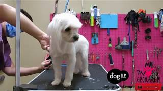 Download Dog Groomers Dont Do Their Job Video