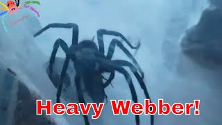 Download Nightmare Spider - Feeding L. fallax. Video