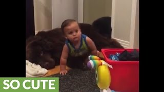 Download Priceless moment captured between baby and dog Video