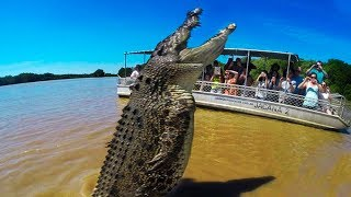 Download BIGGEST Crocodiles In The World! Video