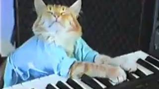Download Charlie Schmidt's Keyboard Cat! - THE ORIGINAL! Video