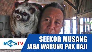 Download SEEKOR MUSANG JAGA WARUNG MAKAN 24 JAM Video
