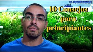 Download 10 Consejos para principiantes Video