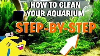Download HOW TO CLEAN YOUR AQUARIUM - Planted Tank Water Change/Gravel/Substrate Cleaning Video
