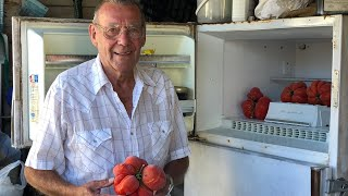 Download In 87 years, it's the largest tomato Marlyn Todahl's ever seen Video