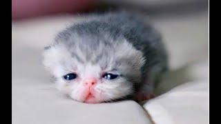 Download JUST WATCH These Cute Baby Animals - Cute Animal Babies Videos 2017 Video